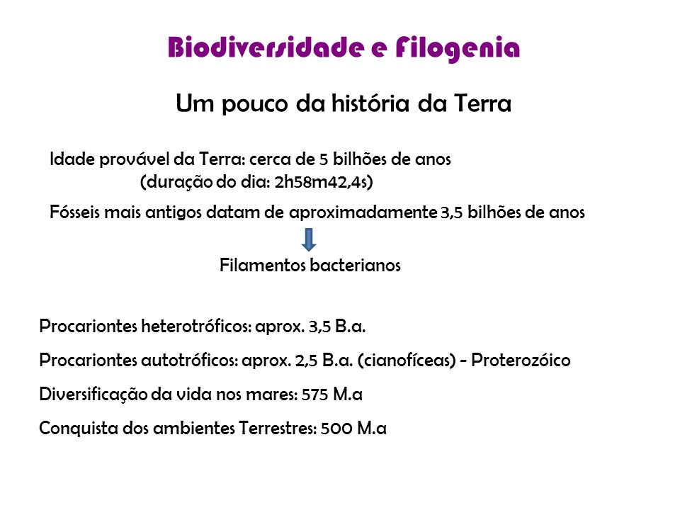 Biodiversidade e Filogenia
