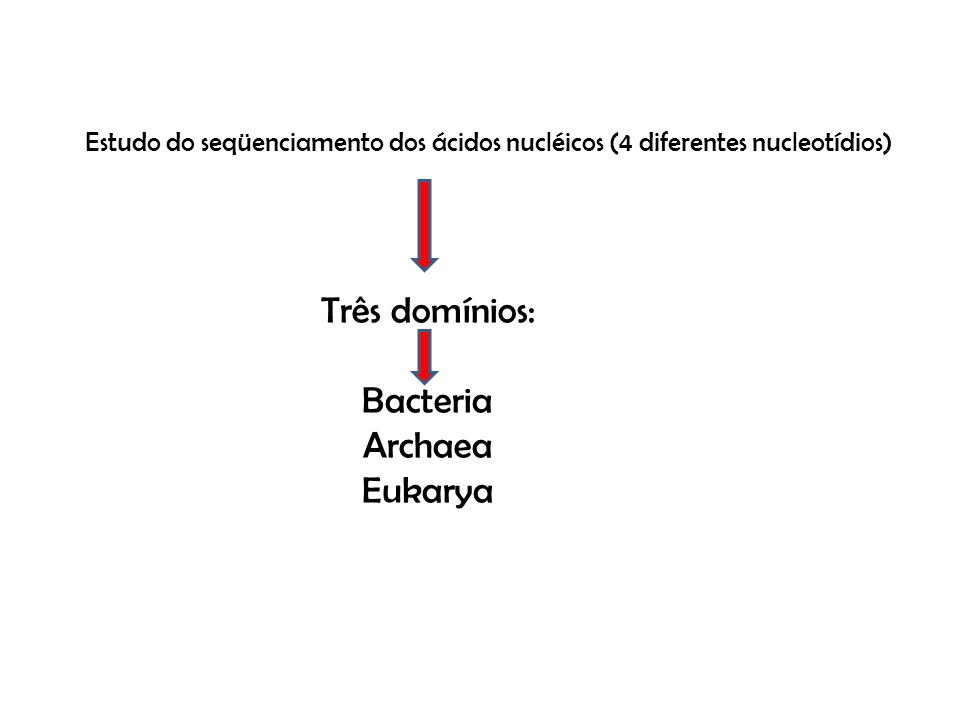 Três domínios: Bacteria Archaea Eukarya
