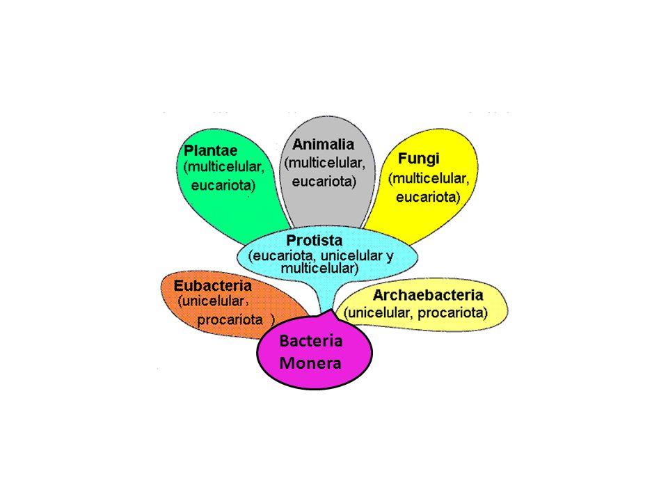 Bacteria Monera r