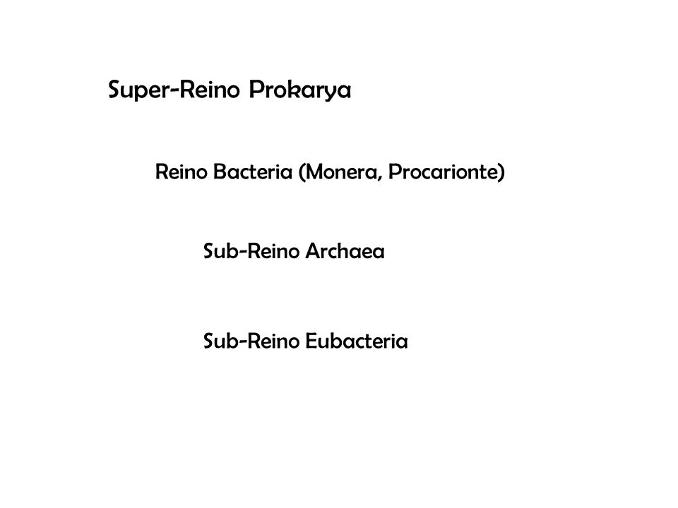 Super-Reino Prokarya Reino Bacteria (Monera, Procarionte)
