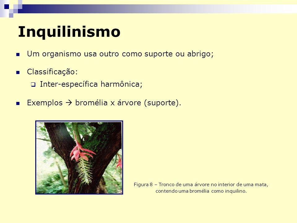 Inquilinismo Um organismo usa outro como suporte ou abrigo;