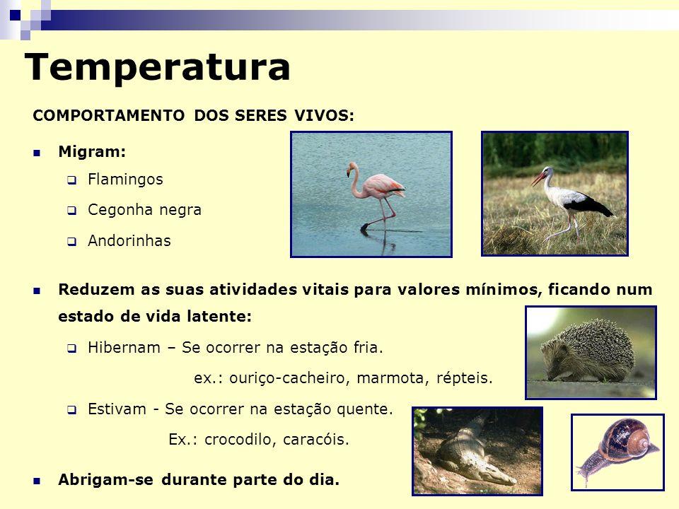 Temperatura COMPORTAMENTO DOS SERES VIVOS: Migram: Flamingos