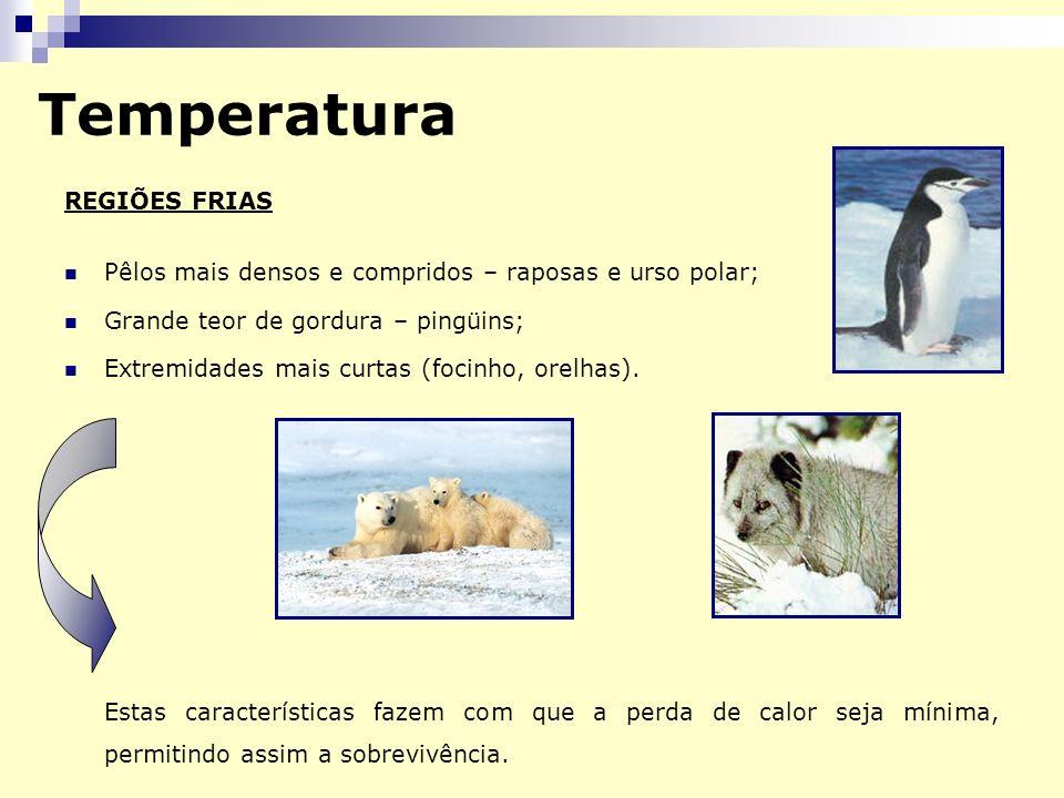 Temperatura REGIÕES FRIAS