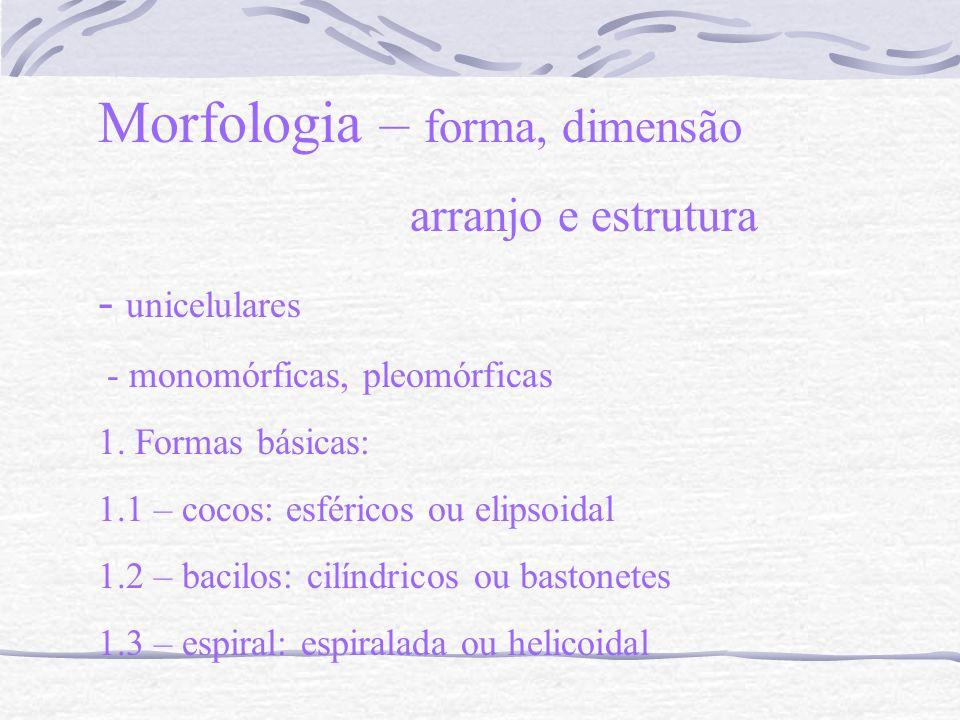 Morfologia – forma, dimensão