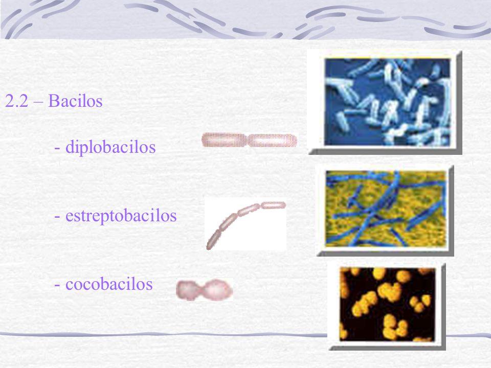 2.2 – Bacilos - diplobacilos - estreptobacilos - cocobacilos