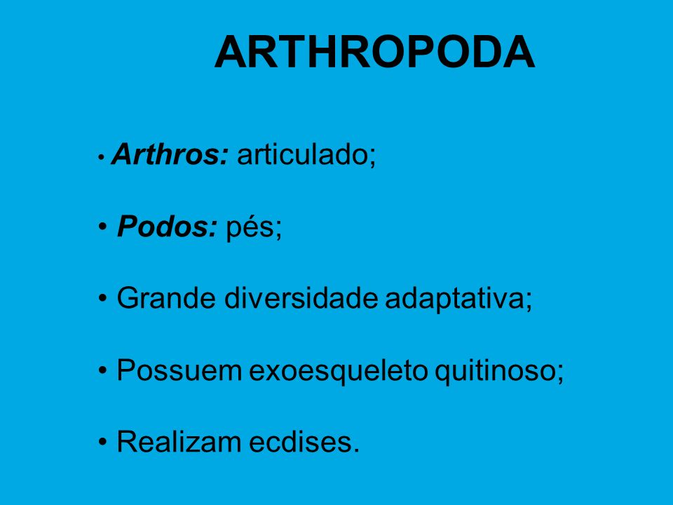 ARTHROPODA Podos: pés; Grande diversidade adaptativa;