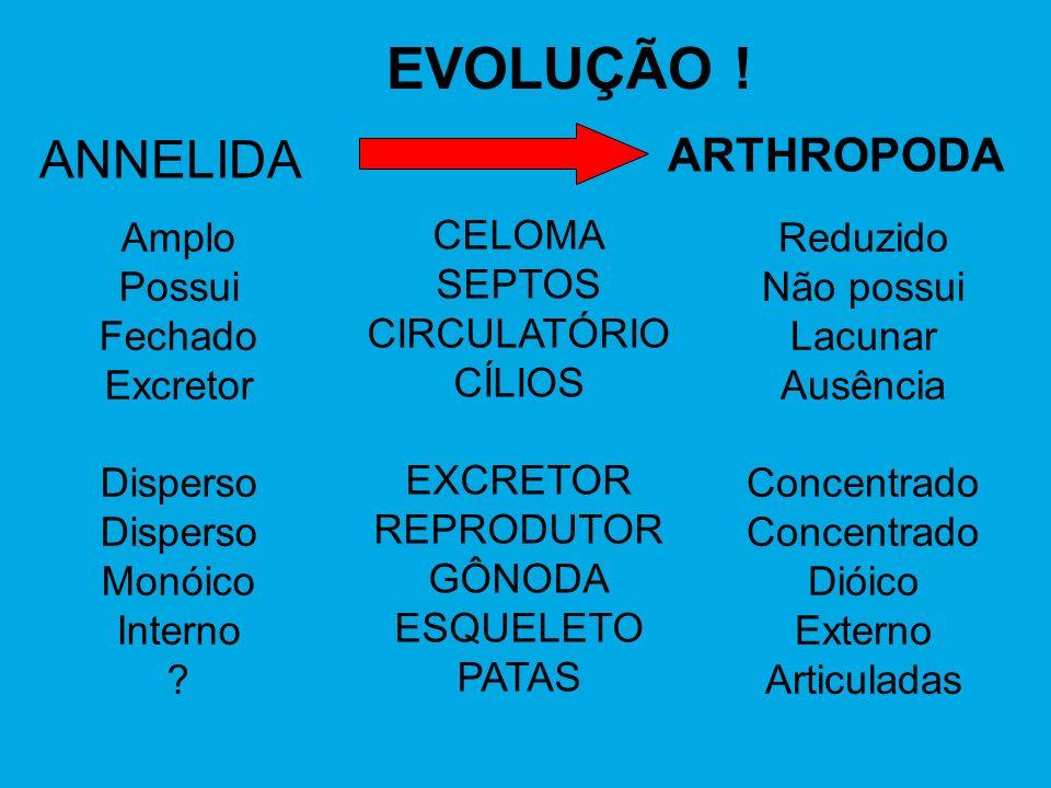 EVOLUÇÃO ! ANNELIDA ARTHROPODA Amplo Possui Fechado Excretor Disperso