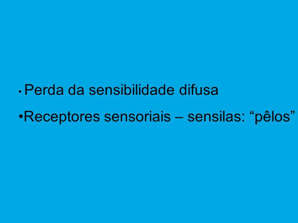 Receptores sensoriais – sensilas: pêlos