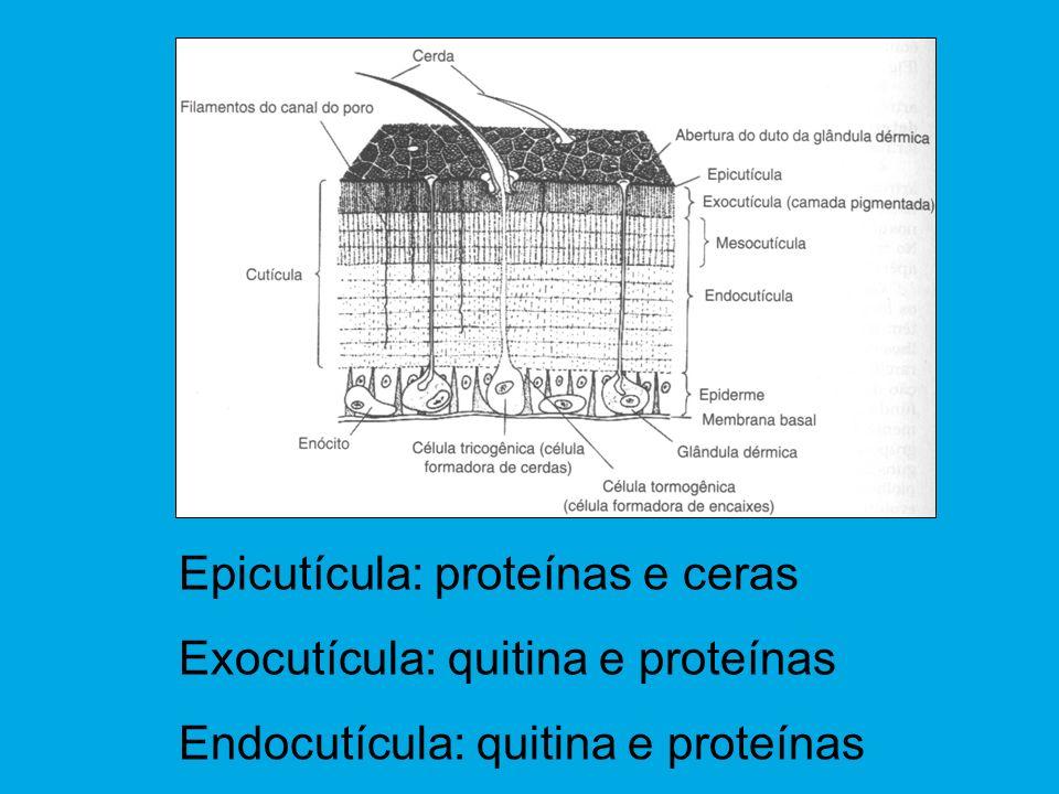Epicutícula: proteínas e ceras