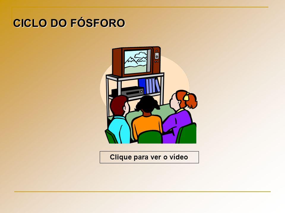 CICLO DO FÓSFORO Clique para ver o vídeo
