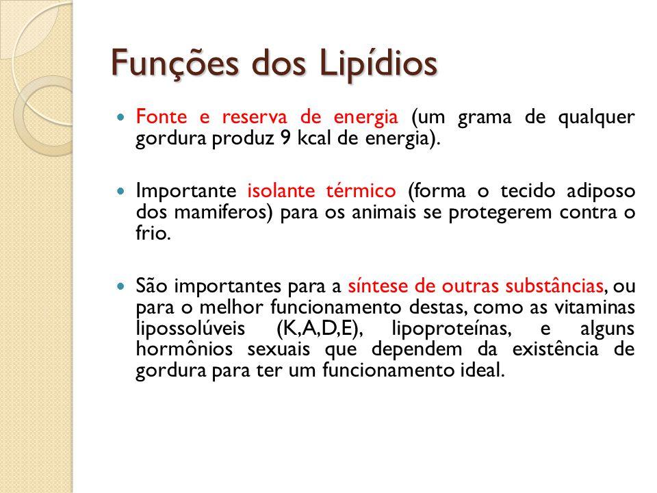 Funções dos Lipídios Fonte e reserva de energia (um grama de qualquer gordura produz 9 kcal de energia).