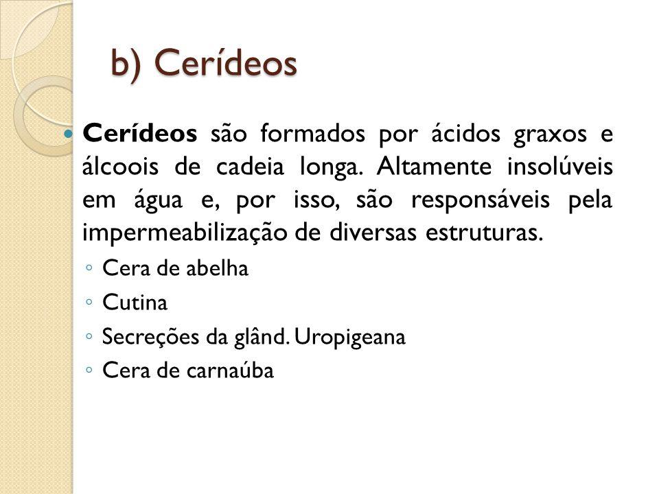 b) Cerídeos