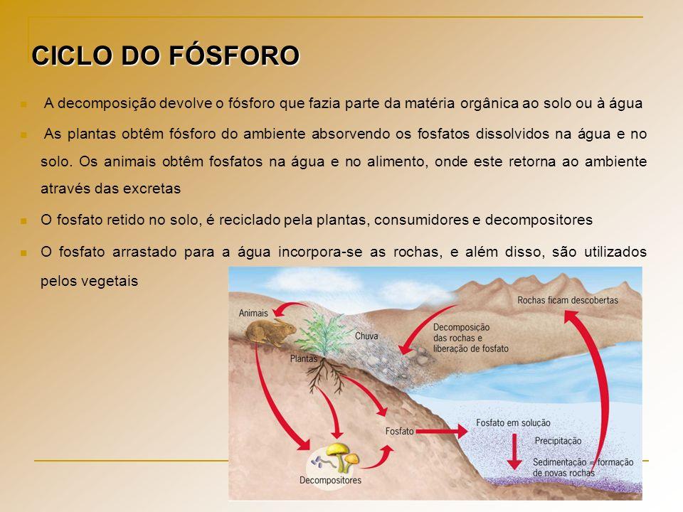 CICLO DO FÓSFORO A decomposição devolve o fósforo que fazia parte da matéria orgânica ao solo ou à água.