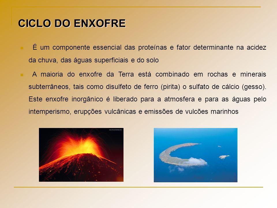 CICLO DO ENXOFRE É um componente essencial das proteínas e fator determinante na acidez da chuva, das águas superficiais e do solo.