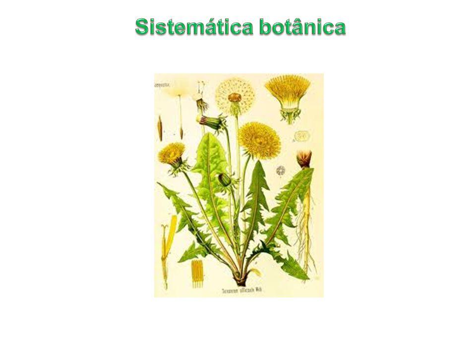 Sistemática botânica