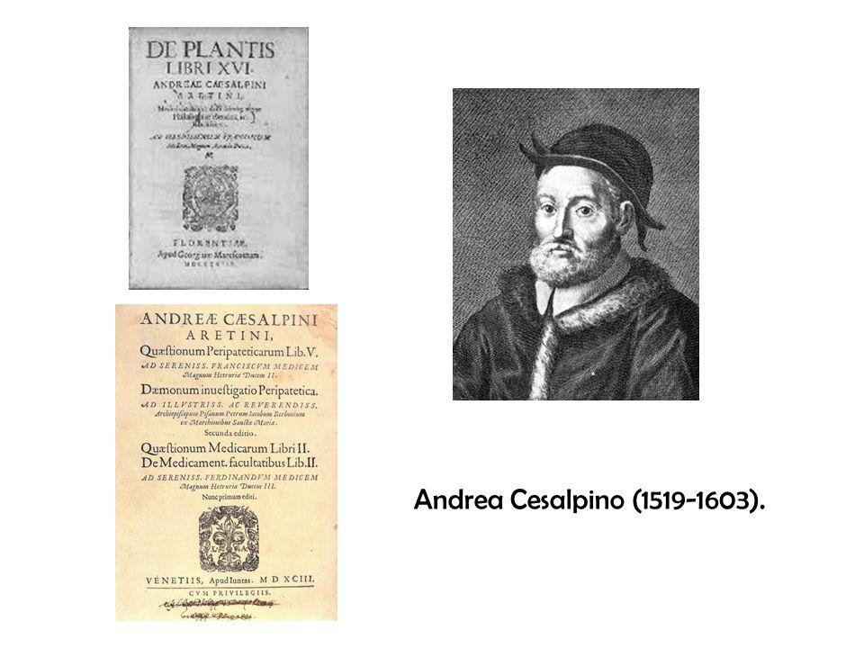 Andrea Cesalpino (1519-1603).