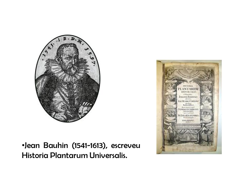 Jean Bauhin (1541-1613), escreveu Historia Plantarum Universalis.