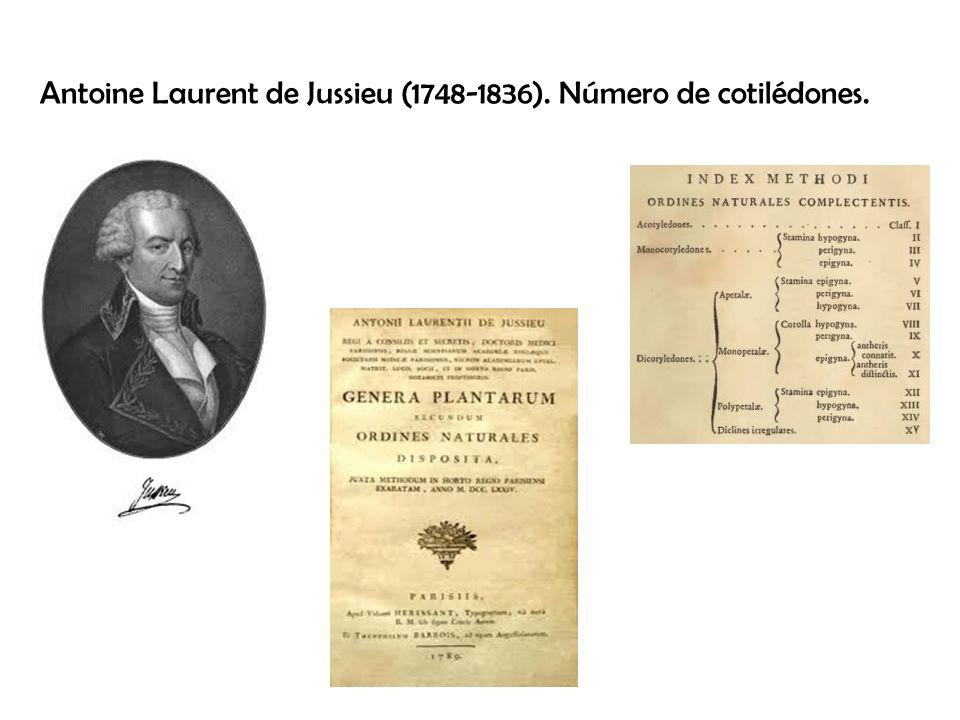 Antoine Laurent de Jussieu (1748-1836). Número de cotilédones.