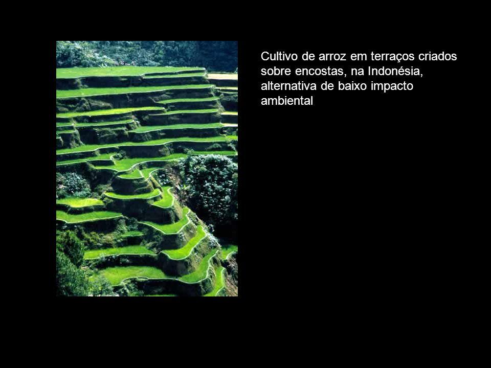Cultivo de arroz em terraços criados sobre encostas, na Indonésia, alternativa de baixo impacto ambiental