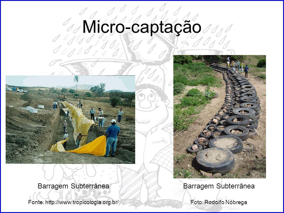 Fonte: http://www.tropicologia.org.br/