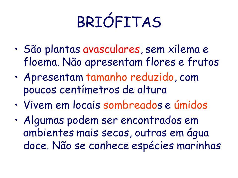 BRIÓFITAS São plantas avasculares, sem xilema e floema. Não apresentam flores e frutos.