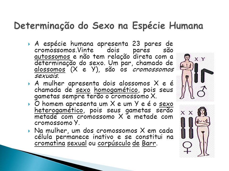 Determinação do Sexo na Espécie Humana
