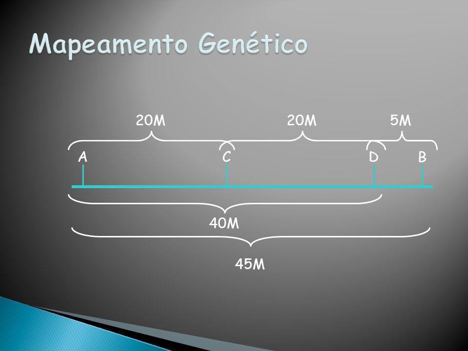 Mapeamento Genético 20M 20M 5M A C D B 40M 45M