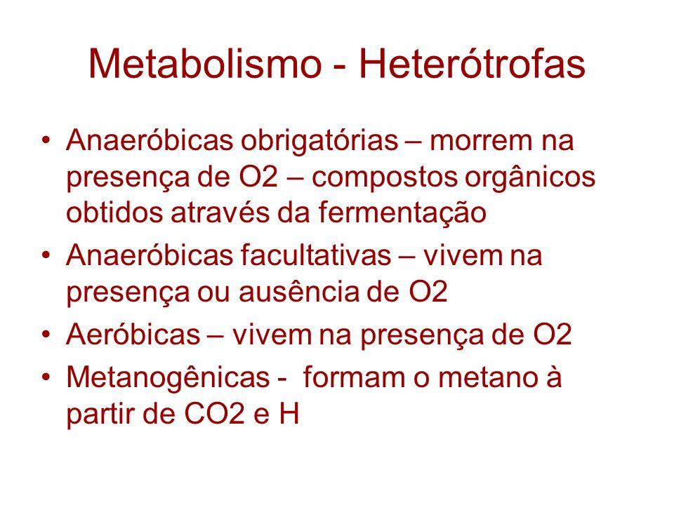 Metabolismo - Heterótrofas