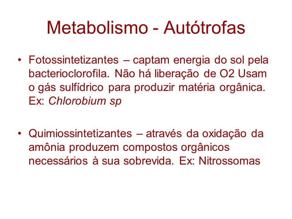 Metabolismo - Autótrofas