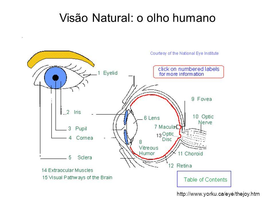 Visão Natural: o olho humano