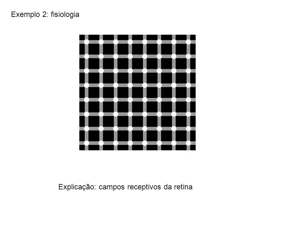 Exemplo 2: fisiologia Explicação: campos receptivos da retina