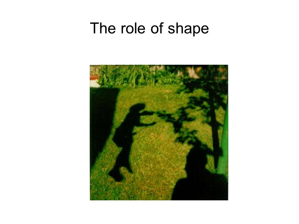 The role of shape