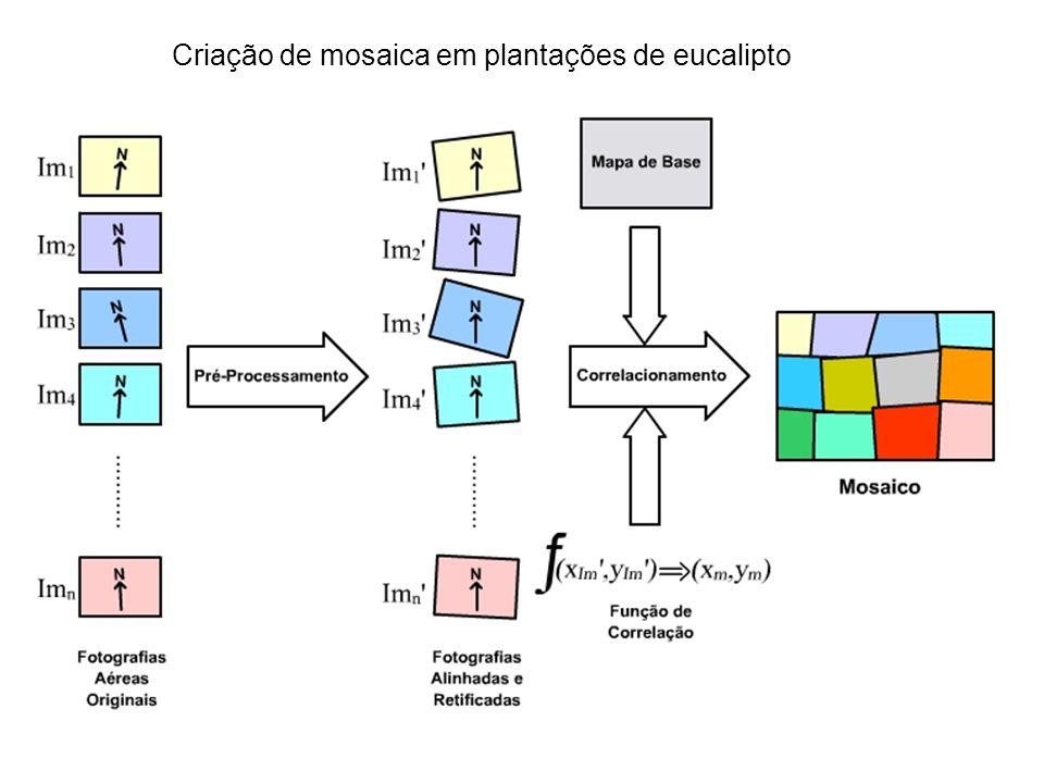 Criação de mosaica em plantações de eucalipto