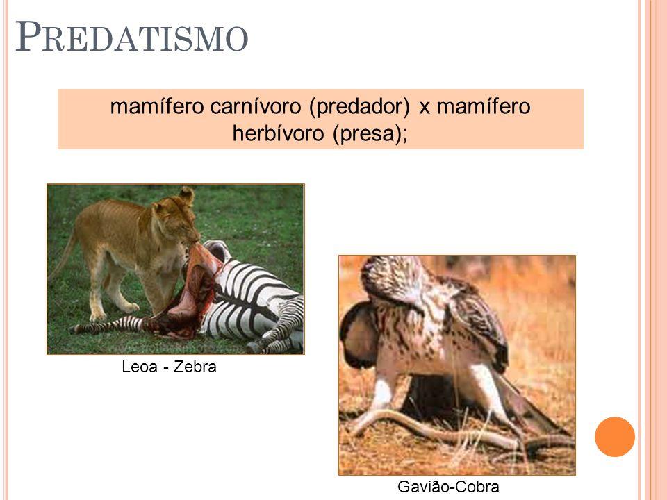 mamífero carnívoro (predador) x mamífero herbívoro (presa);