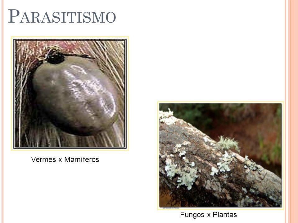 Parasitismo Vermes x Mamíferos Fungos x Plantas