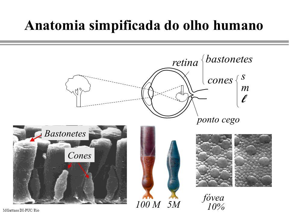 Anatomia simpificada do olho humano