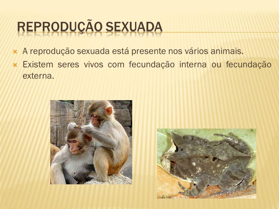 Reprodução sexuada A reprodução sexuada está presente nos vários animais.