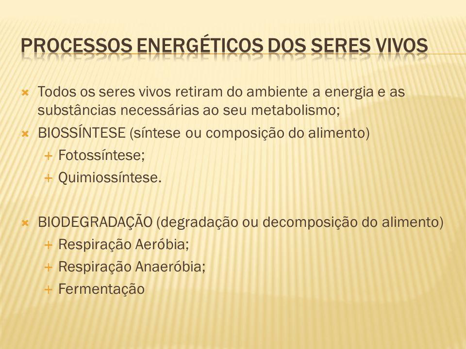Processos energéticos dos seres vivos