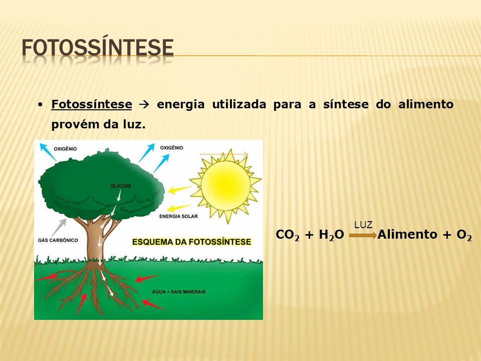 fotossíntese CO2 + H2O Alimento + O2