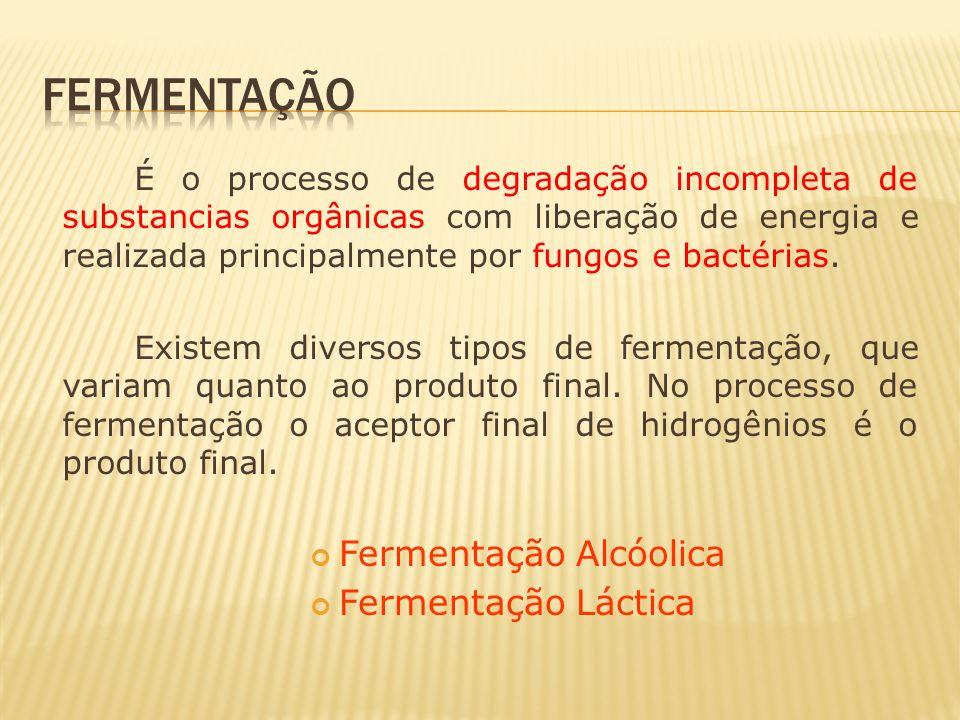 fermentação Fermentação Alcóolica Fermentação Láctica