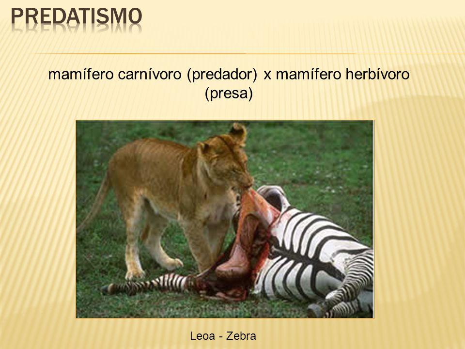 mamífero carnívoro (predador) x mamífero herbívoro (presa)
