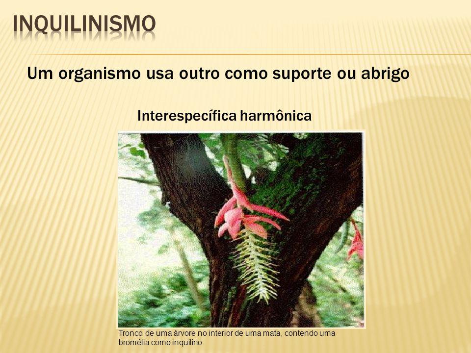 Inquilinismo Um organismo usa outro como suporte ou abrigo