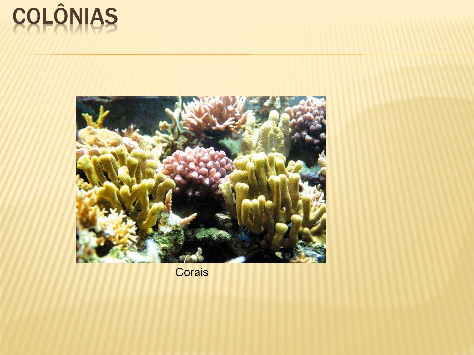 Colônias Corais