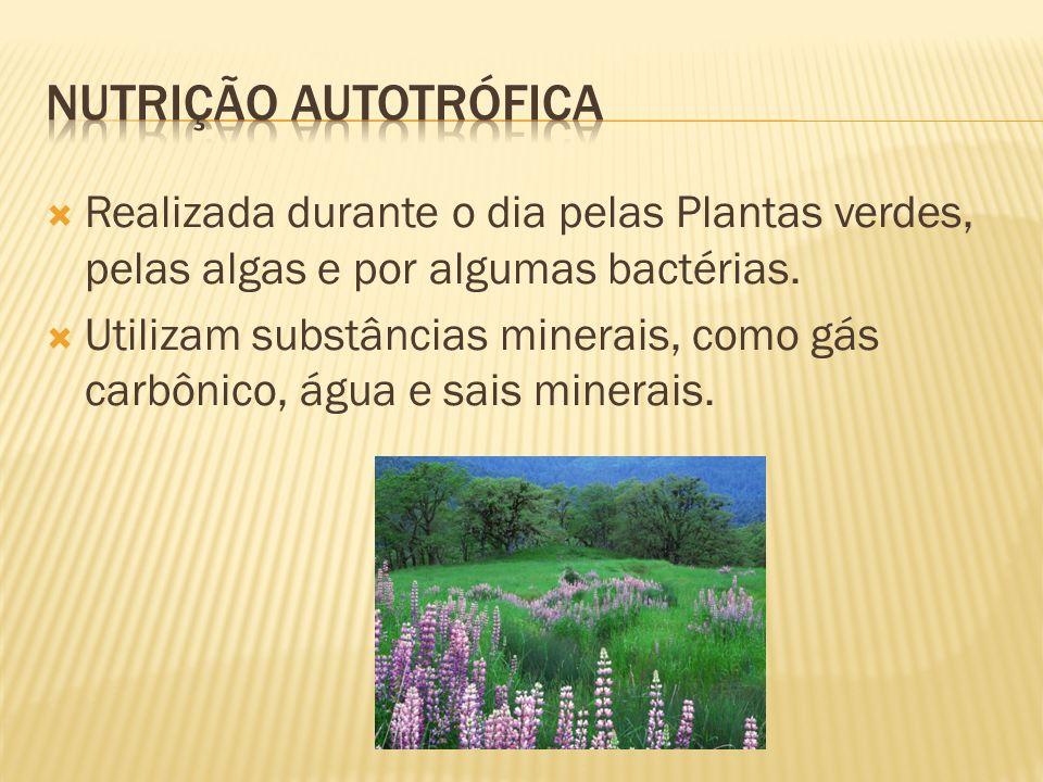Nutrição Autotrófica Realizada durante o dia pelas Plantas verdes, pelas algas e por algumas bactérias.