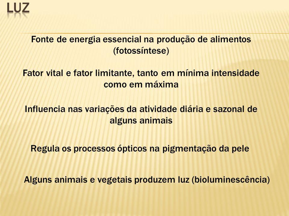 luz Fonte de energia essencial na produção de alimentos (fotossíntese)