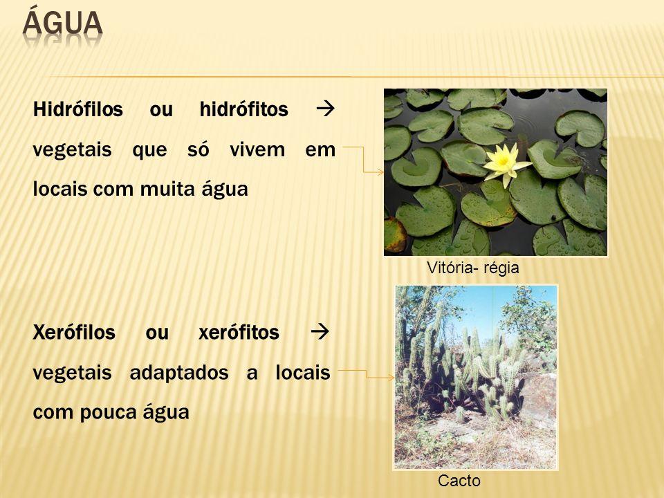 Água Hidrófilos ou hidrófitos  vegetais que só vivem em locais com muita água. Vitória- régia.