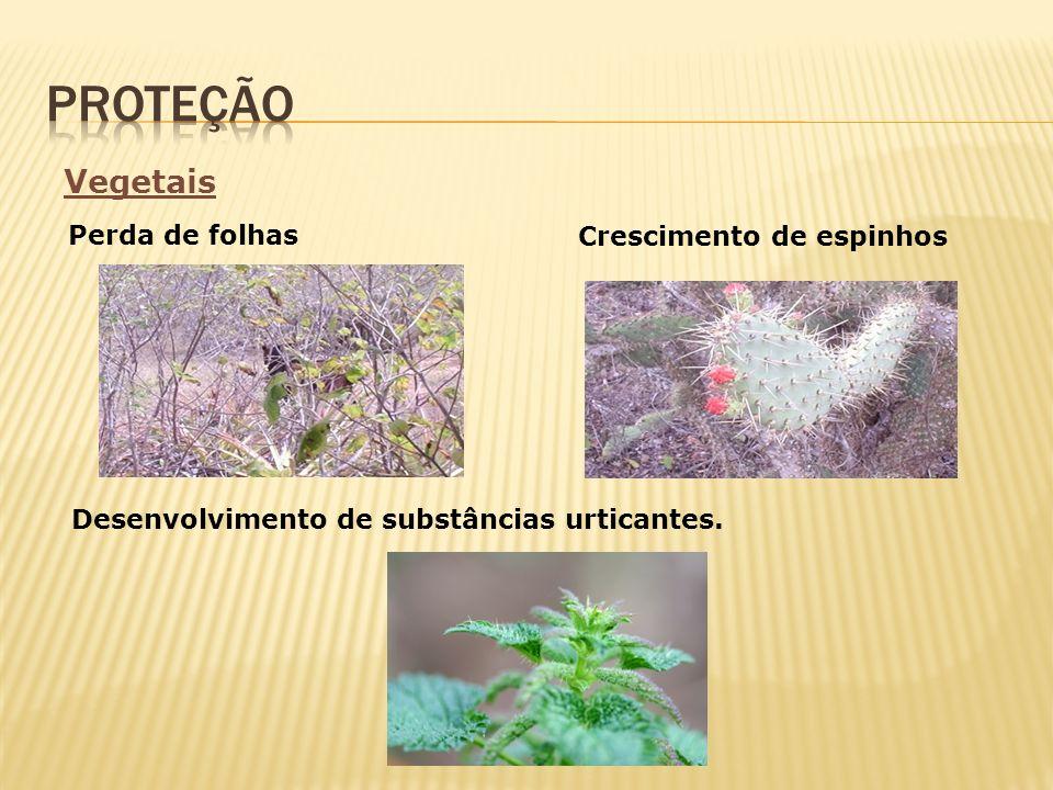 proteção Vegetais Perda de folhas Crescimento de espinhos