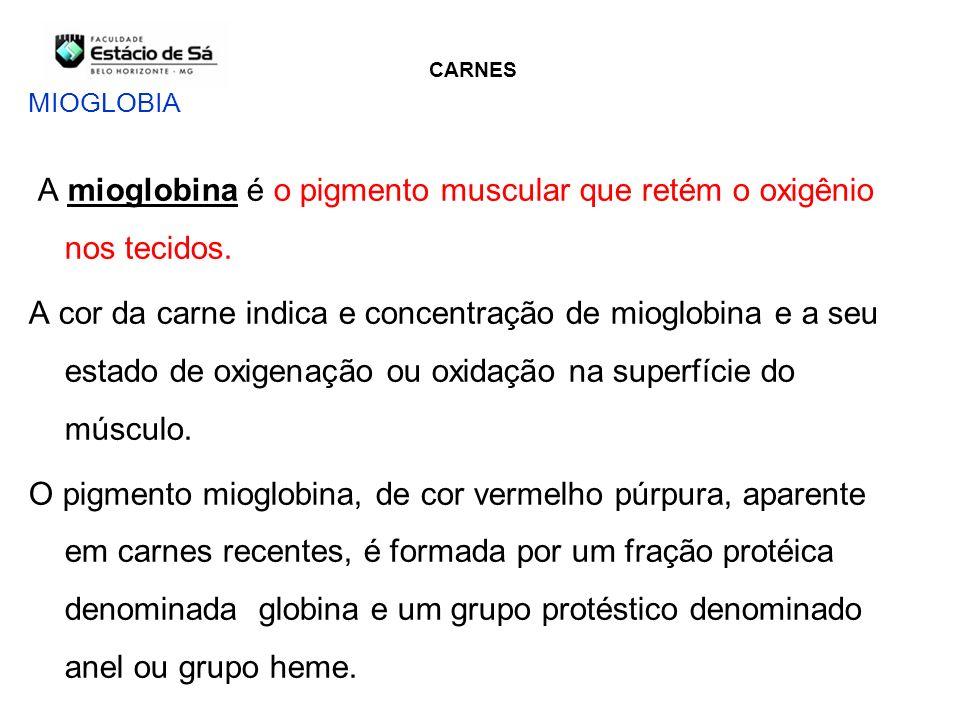 A mioglobina é o pigmento muscular que retém o oxigênio nos tecidos.