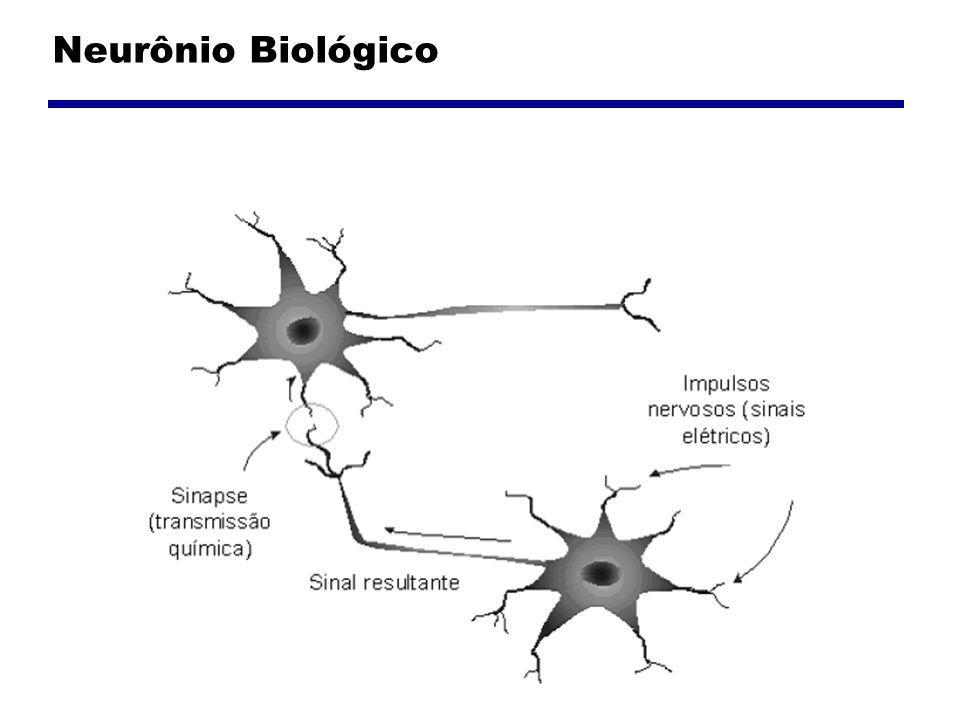Neurônio Biológico