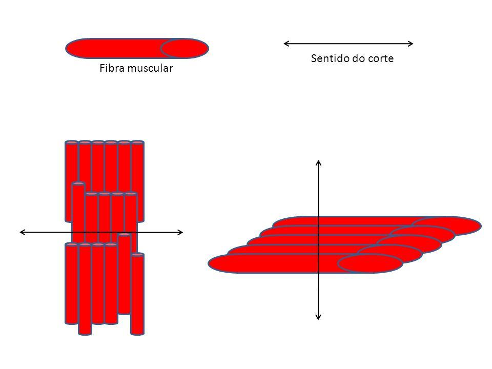 Fibra muscular Sentido do corte